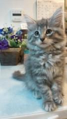 崎本大海 公式ブログ/新しいネコちゃんです! 画像2