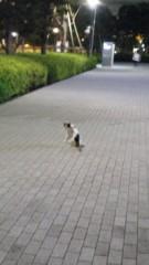 崎本大海 公式ブログ/ネコがいた 画像1