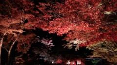 崎本大海 公式ブログ/紅葉あんど白黒葉 画像3