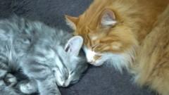 崎本大海 公式ブログ/新しいネコちゃんです! 画像1