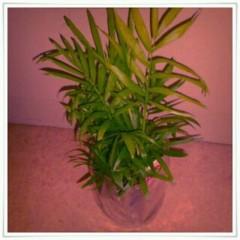 Happiness 公式ブログ/観葉植物♪2♪ KAREN 画像1
