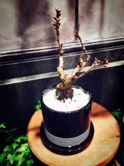 福田ゆみ 公式ブログ/盆栽は如何ですか? 画像1