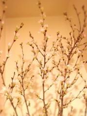 福田ゆみ 公式ブログ/うちの春 画像1