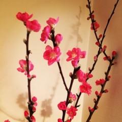 福田ゆみ 公式ブログ/春の訪れ 画像2