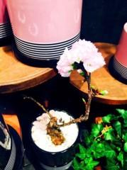 福田ゆみ 公式ブログ/盆栽は如何ですか? 画像2