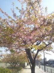 笹野花歩 公式ブログ/春だねー!! 画像1