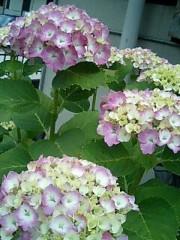 神取忍 公式ブログ/2010-06-12 08:53:19 画像1