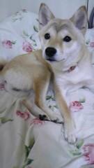 平有紀子 公式ブログ/ワンコ 画像3
