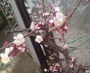 桜木みか(みかてん) 公式ブログ/★リアル家の庭に★ 画像1