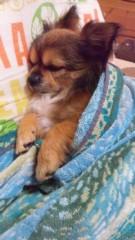 大西颯季 公式ブログ/おっさん犬!!ちょこ 画像1