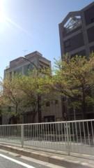 ジャガー横田 公式ブログ/桜が…(>_< 。) 画像1