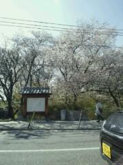 ジャガー横田 公式ブログ/今が満開!? 上田市の桜(*^_^*) 画像1