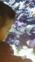 ジャガー横田 公式ブログ/アクアリウム水族館!(^^)v 画像2