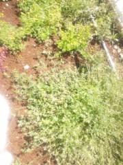小川みこと 公式ブログ/お庭の草むしりなう。 画像1