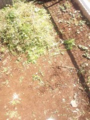小川みこと 公式ブログ/お庭の草むしりなう。 画像2