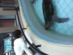 加藤ゆき 公式ブログ/イルカとカメとくらげ 画像1