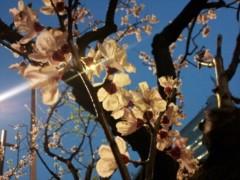 加藤ゆき 公式ブログ/春日和 画像2