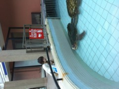 加藤ゆき 公式ブログ/イルカとカメとくらげ 画像2