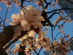 加藤ゆき 公式ブログ/春日和 画像1