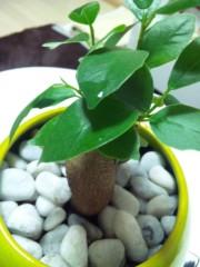加藤ゆき 公式ブログ/ガジュマルの樹 画像2