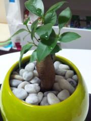 加藤ゆき 公式ブログ/ガジュマルの樹 画像1
