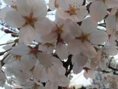 加藤ゆき 公式ブログ/おはよう☆ 画像1