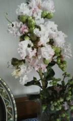 天地総子 公式ブログ/サルスベリの花 画像1