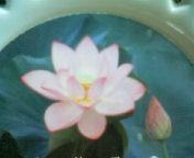 天地総子 公式ブログ/みゆきちゃんと蓮の花 画像2