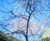 天地総子 公式ブログ/花の季節に 画像1