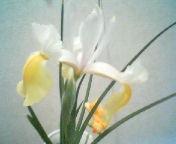 天地総子 公式ブログ/花の姿 画像2