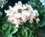 天地総子 公式ブログ/冬の花たち 画像1