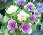 天地総子 公式ブログ/冬の花たち 画像2