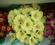 天地総子 公式ブログ/春を運んでくれる花たち 画像2