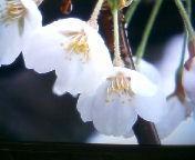 天地総子 公式ブログ/春を先撮り 画像1