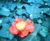 天地総子 公式ブログ/花の姿 画像1