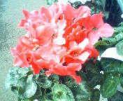 天地総子 公式ブログ/冬の花たち 画像3