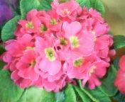 天地総子 公式ブログ/春の予感 画像2
