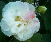 天地総子 公式ブログ/いわき市、21世紀の森公園にて 画像2