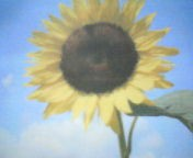 天地総子 公式ブログ/手のひらを太陽に 画像1