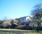 天地総子 公式ブログ/桜便り 画像2