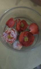 天地総子 公式ブログ/桜のまえの椿 画像2