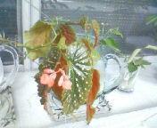 天地総子 公式ブログ/いろいろな秋 画像2