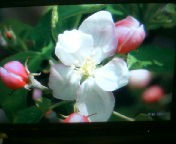 天地総子 公式ブログ/春を先撮り 画像3