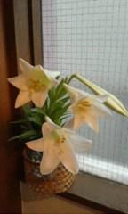 天地総子 公式ブログ/花の競演 画像3
