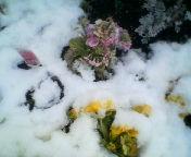 天地総子 公式ブログ/東京の雪 画像1