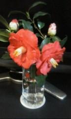 天地総子 公式ブログ/桜のまえの椿 画像1