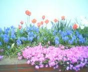 天地総子 公式ブログ/お花の力 画像1