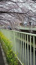 天地総子 公式ブログ/花まつり 画像2