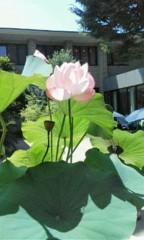 天地総子 公式ブログ/蓮の花 画像1