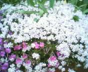 天地総子 公式ブログ/お花の力 画像2